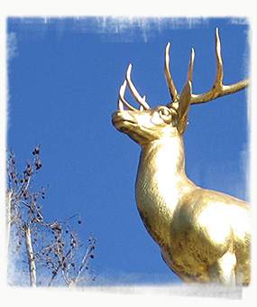The golden stag is a nod to the forest that once covered Schöneberg. - by SL Wong